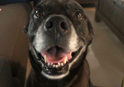 #labradordogtraining #bestdogtrainingmiami