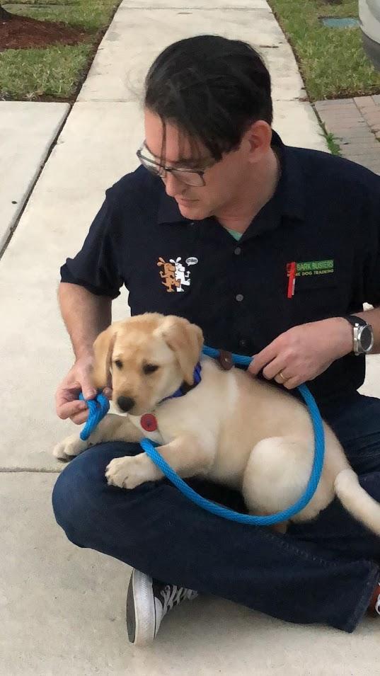 #bestmiamidogtraining #puppytraining #puppytrainermiami