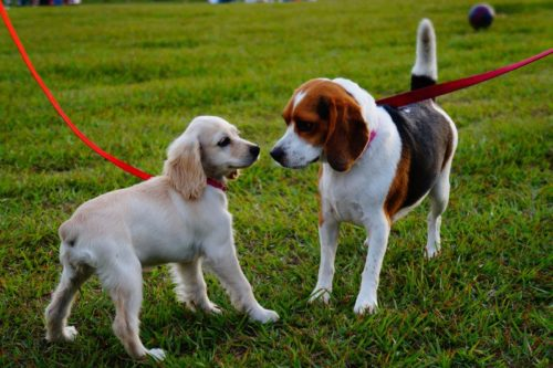 Miami Dog Walking Tips by BarkBusters