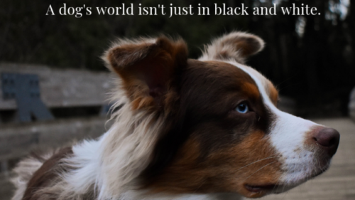 Is Your Dog Color Blind?