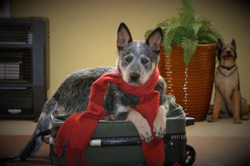 Travel With Your Miami Dog