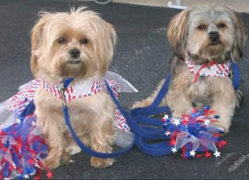Keeping Your Dogs Safe on July 4th