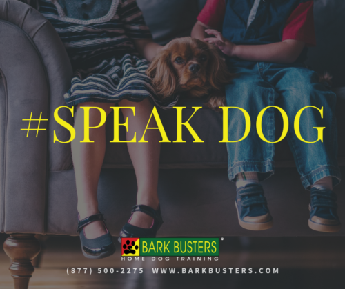 Speak Your Dog's Language